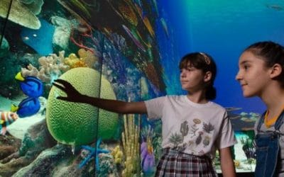 The 3D Living Reef at QUT